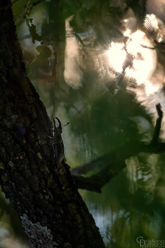 Nel silenzio del bosco
